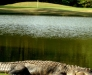 Best Golf Packages alligator